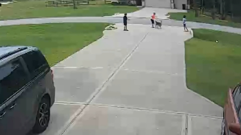 GRAPHIC VIDEO: Hero neighbor rushes in to save boy attacked by pit bull