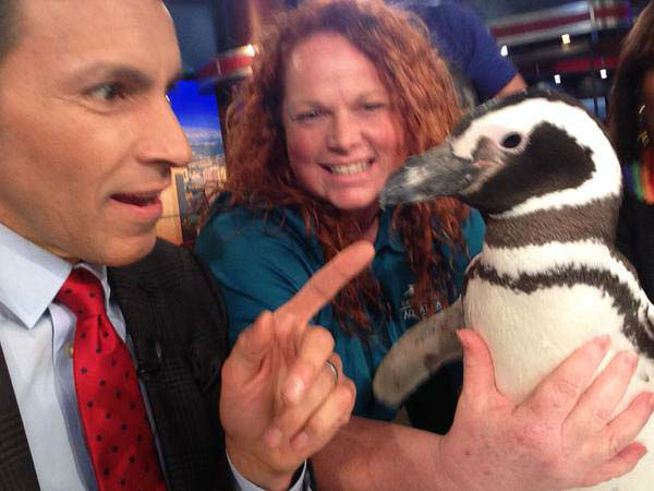 """<div class=""""meta image-caption""""><div class=""""origin-logo origin-image none""""><span>none</span></div><span class=""""caption-text"""">Our friends from Sea World stopped by the set (KTRK Photo)</span></div>"""