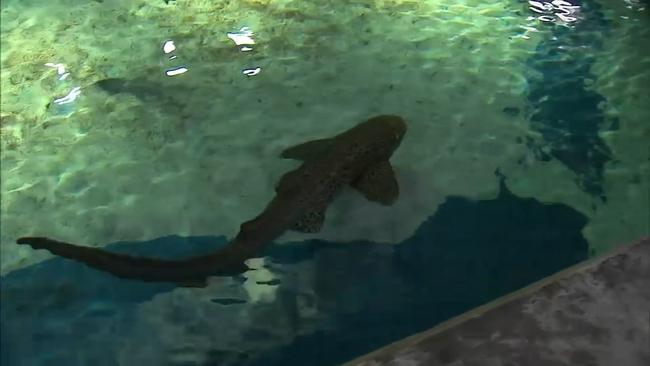 Shark attack   abc7chicago com