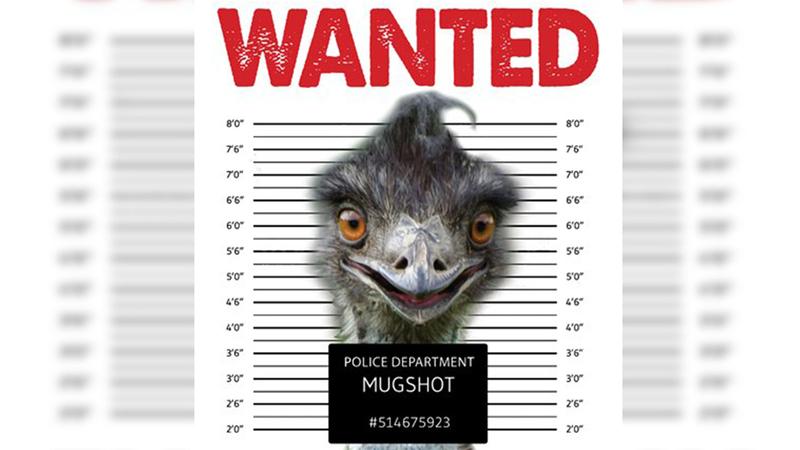 Orange County emu on the loose | WCTI
