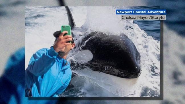 Ultrasound reveals beluga whale at Georgia Aquarium is ...