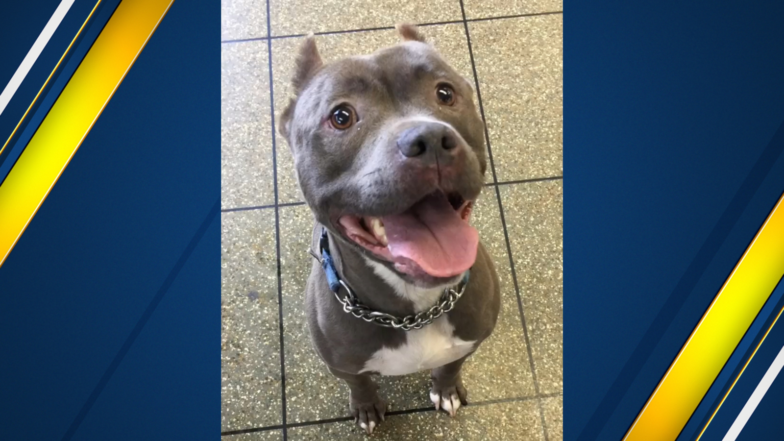 Dog finally adopted after more than 1,000 days at Valley Animal Shelter