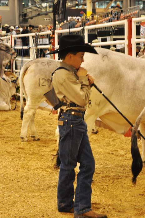 "<div class=""meta image-caption""><div class=""origin-logo origin-image none""><span>none</span></div><span class=""caption-text"">A cowboy taking a closer look at the cattle (KTRK Photo/ Amanda Cochran)</span></div>"