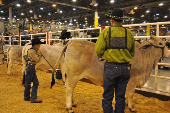 "<div class=""meta image-caption""><div class=""origin-logo origin-image none""><span>none</span></div><span class=""caption-text"">Cowboys taking a closer look at the cattle (KTRK Photo/ Amanda Cochran)</span></div>"