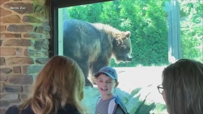 Jaguar attacks woman taking selfie at Arizona zoo | abc7news com