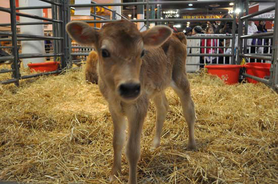 """<div class=""""meta image-caption""""><div class=""""origin-logo origin-image none""""><span>none</span></div><span class=""""caption-text"""">Baby animals and other wildlife attractions delighted crowds this week at Rodeo Houston. (KTRK Photo/ Amanda Cochran)</span></div>"""