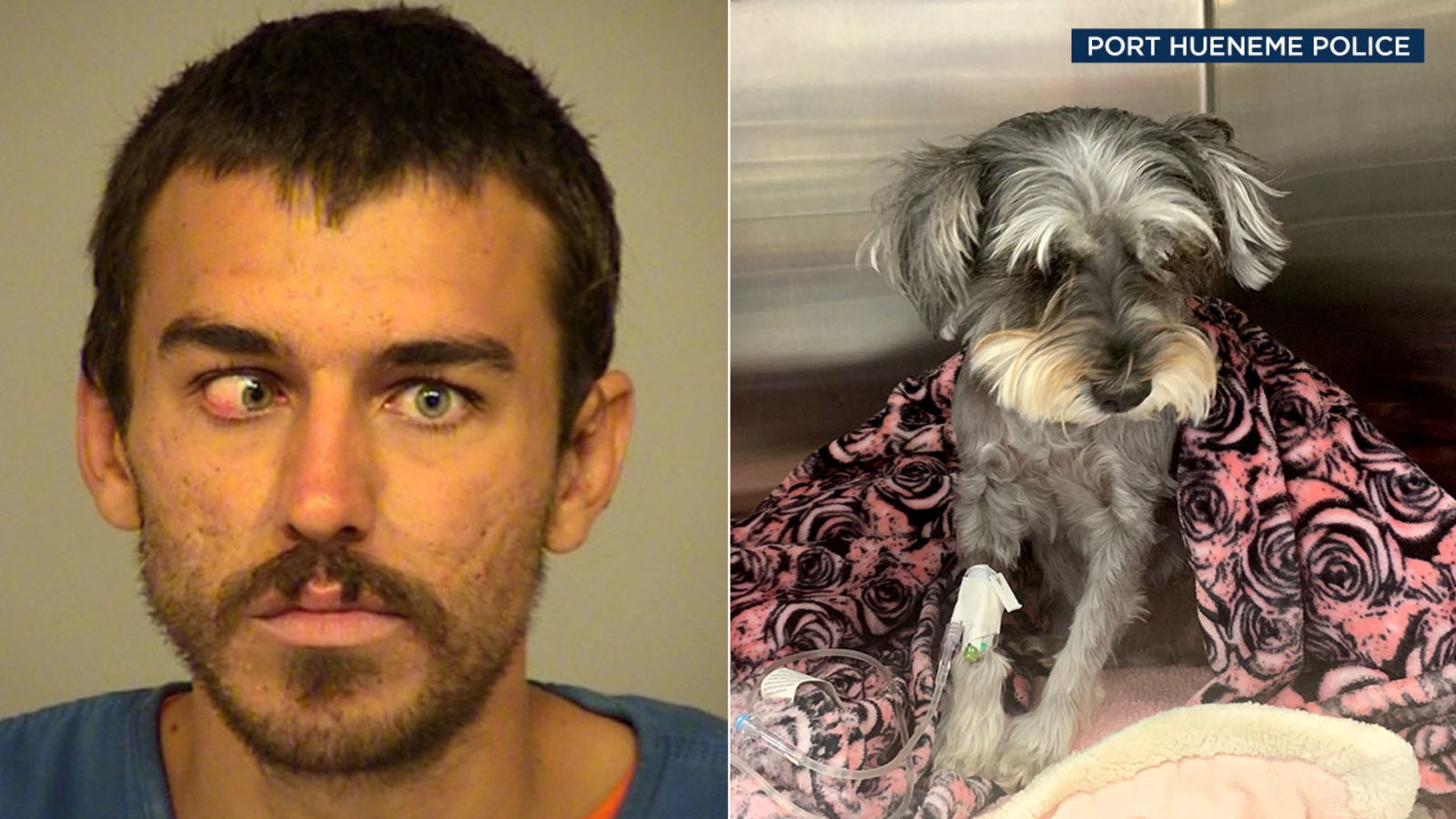 Man kicks stranger's dog 15 feet into air, animal suffers collapsed lung, displaced heart, police say