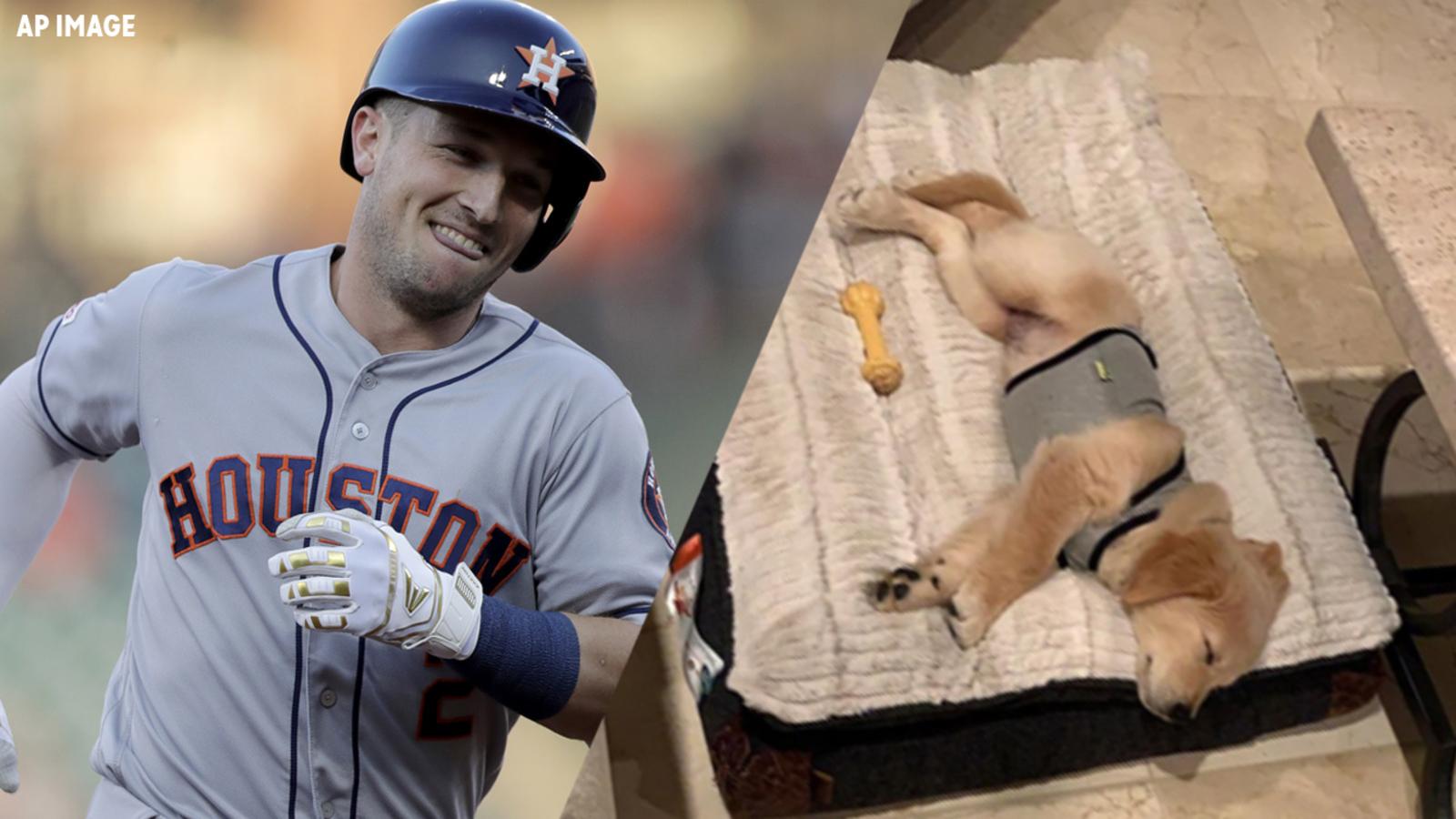 Astros Alex Bregman Shows Off Adorable New Puppy On Instagram Abc13 Houston