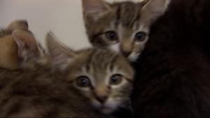 Cats | abc7news com