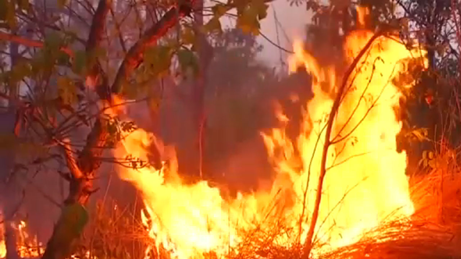 How Amazon Rain-forest Started Burning?