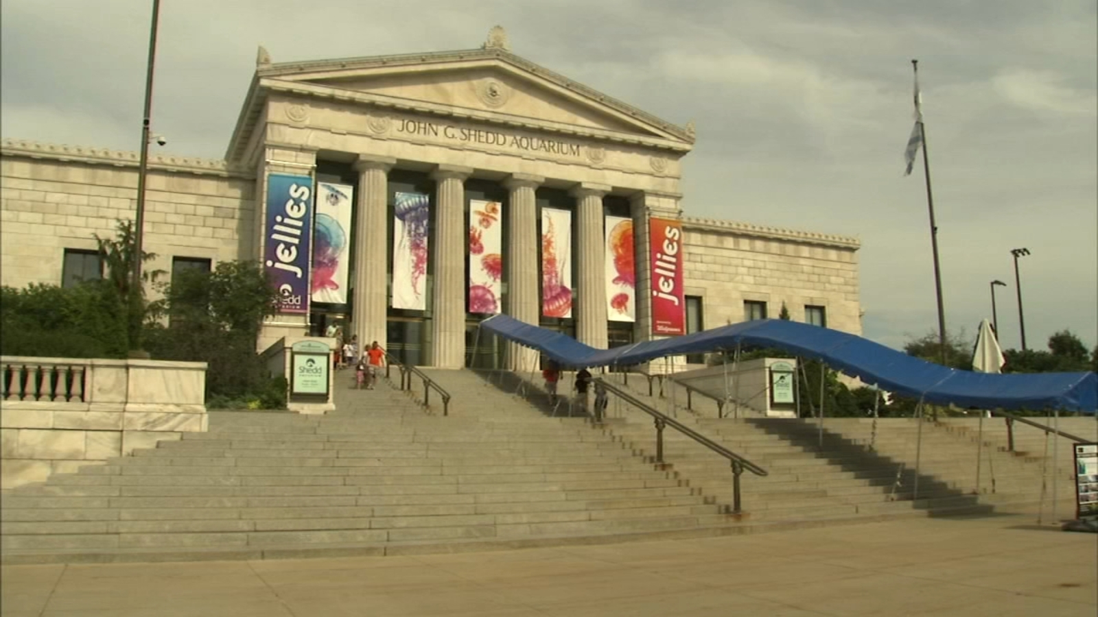 Shedd Aquarium offering free admission to Illinois residents on 12 days in September