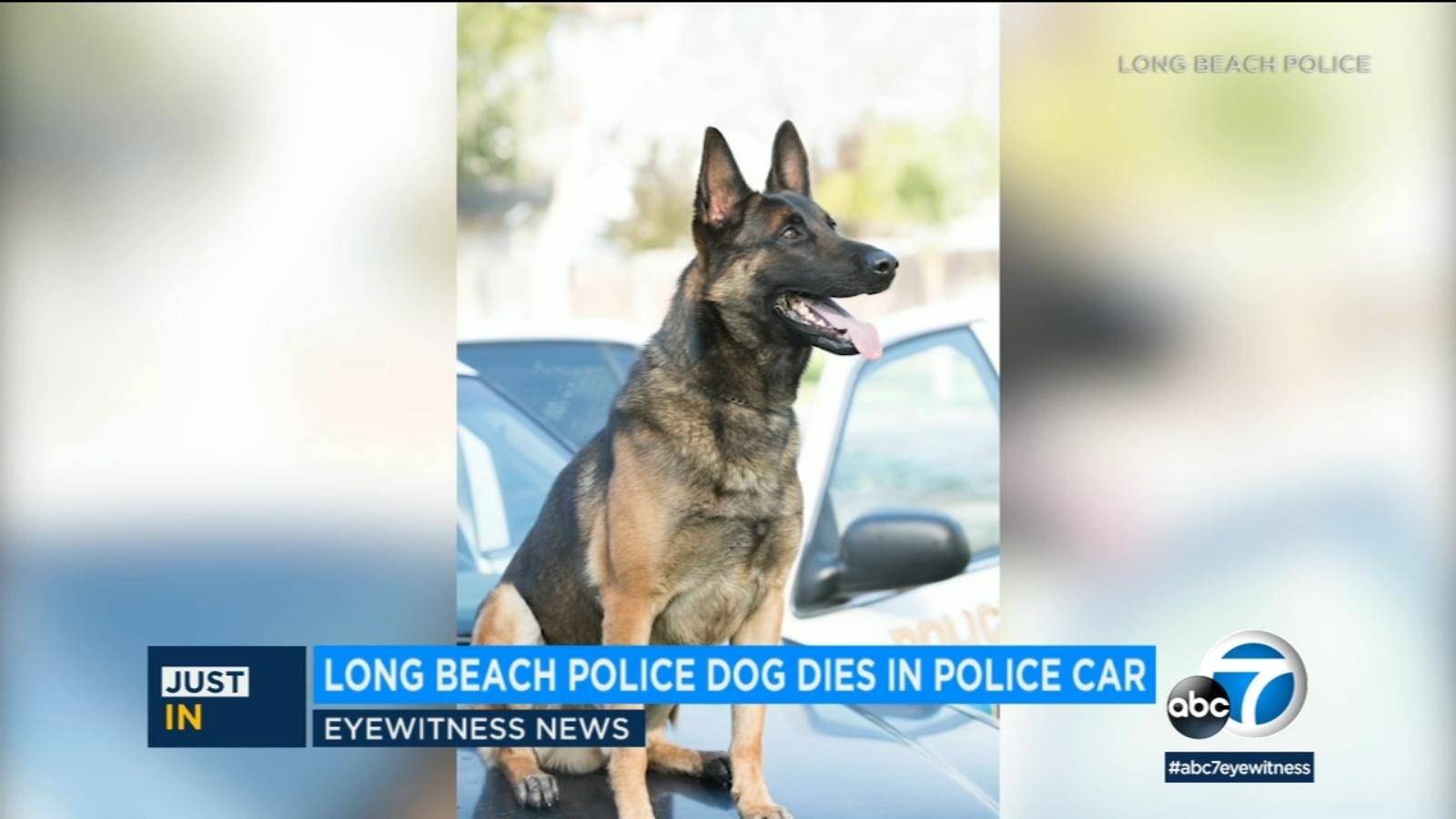 Police dog dies inside department vehicle in Long Beach, Calif.