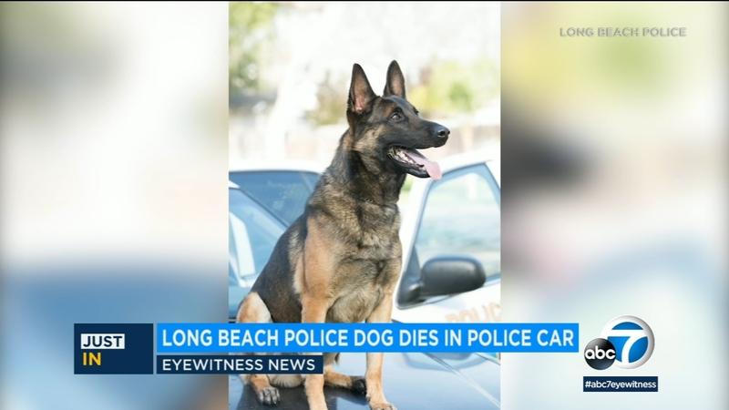 Long Beach police dog dies inside department vehicle