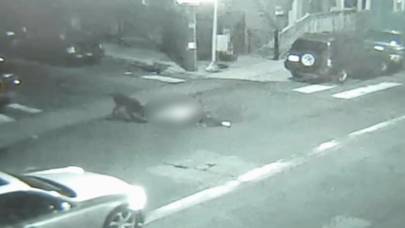 Video shows police open fire as dogs attack man in Hunting Park