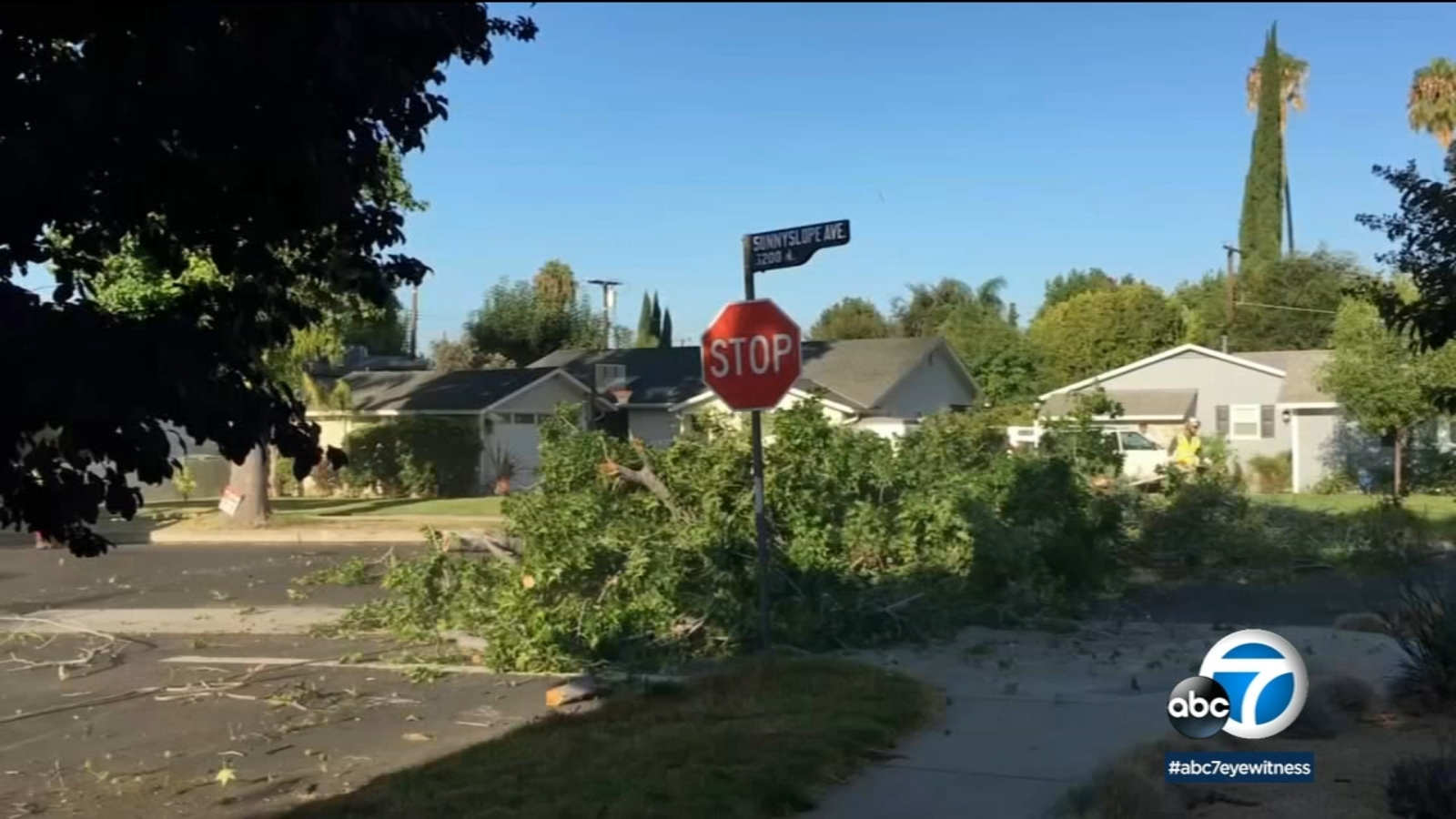 Sherman Oaks residents angry over removal of decades-old trees