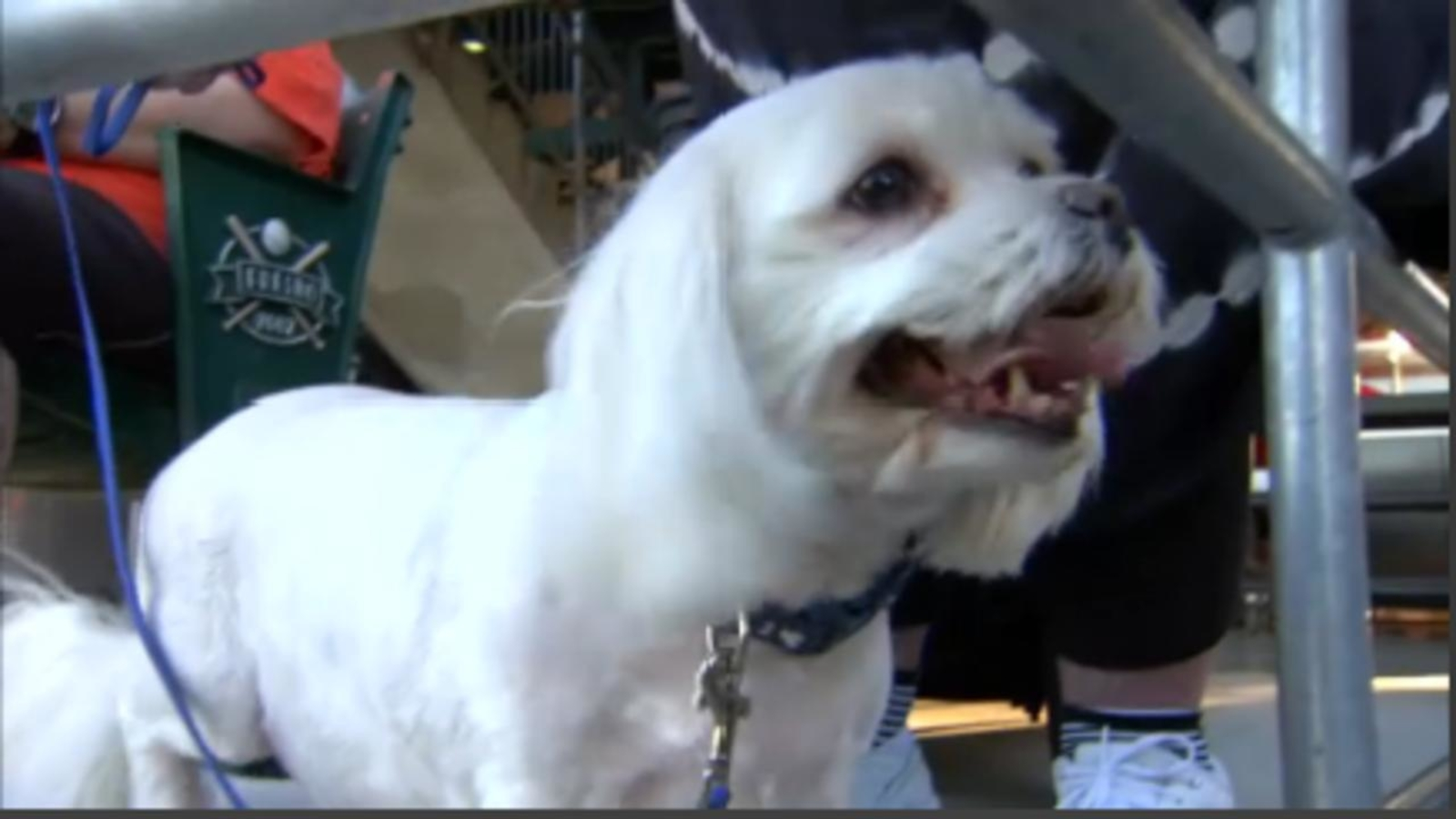 Fresno Grizzlies cancel 'Bark in the Park' because of heat