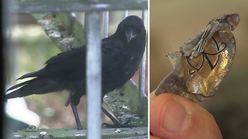 SF woman befriends crows, who leave her gifts
