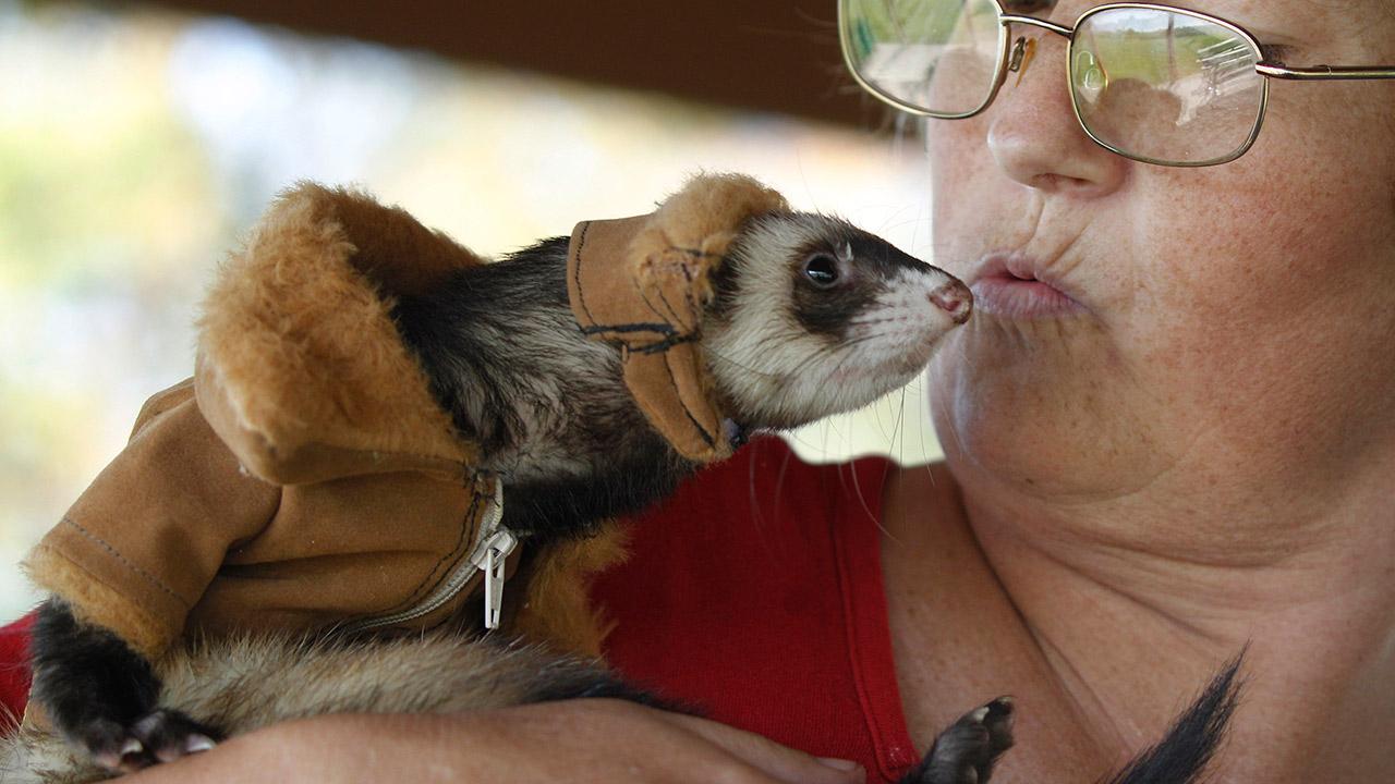 AmyJo Casner kisses her pet ferret, Manny