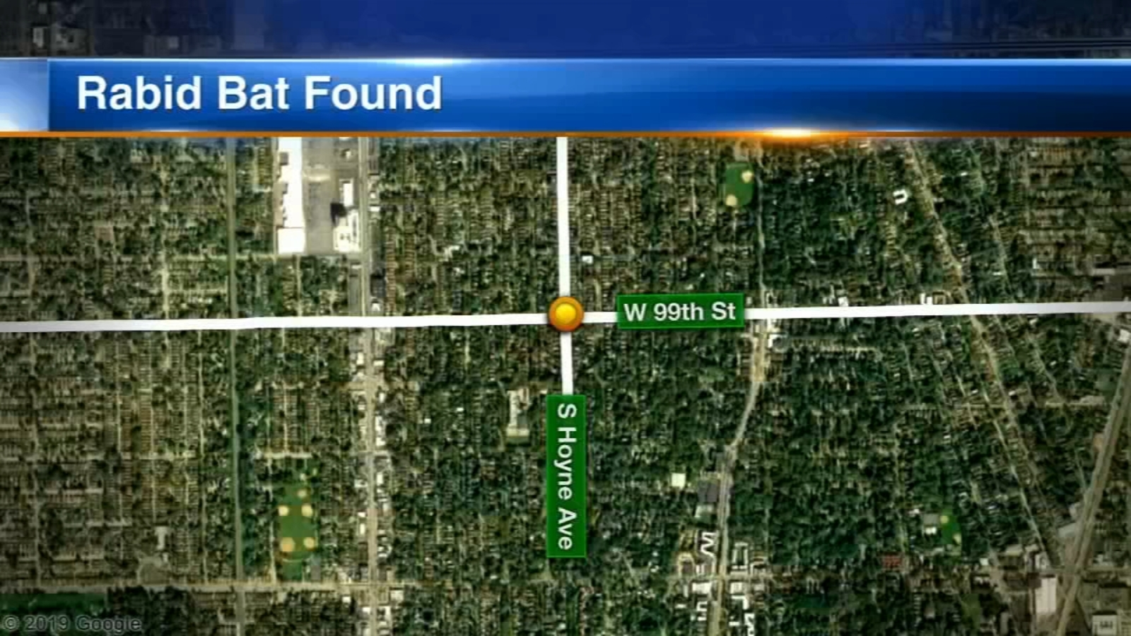 Rabid bat discovered on Chicago's South Side