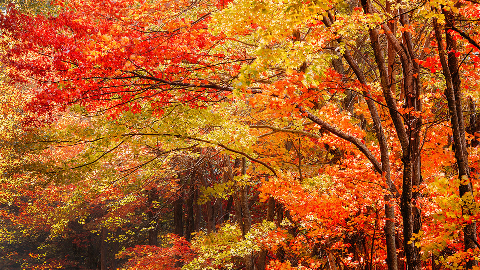 Fall Colors Report - Guadalupe Mountains National Park (U