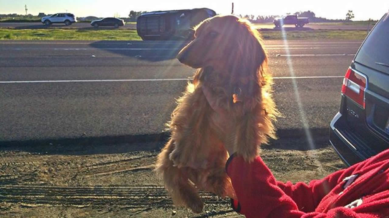 """A good Samaritan and her dog """"Frankie Furter"""" helped a teen involved in a solo vehicle crash in Antioch, Calif. on March 12, 2015."""