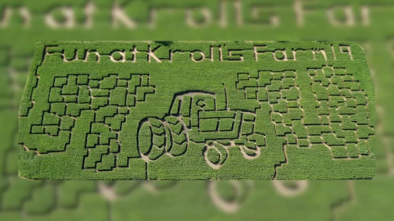 Corn maze opens for season at Kroll's Fall Harvest Farm in Waukegan, cornfield carved by hand with machetes