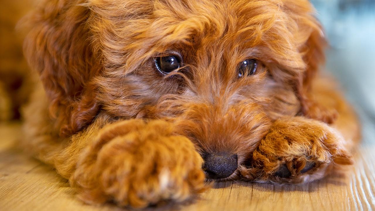 Dog Abc7news Com