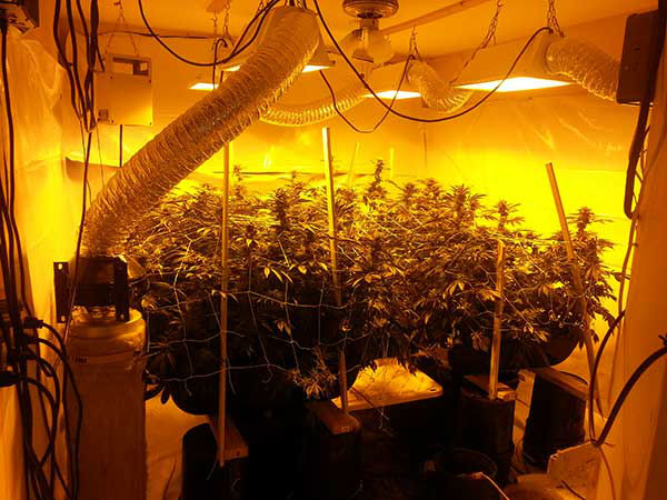 """<div class=""""meta image-caption""""><div class=""""origin-logo origin-image none""""><span>none</span></div><span class=""""caption-text"""">This is from one of the suspected grow Houston (Photo/Ft. Bend County Sheriff's Office)</span></div>"""