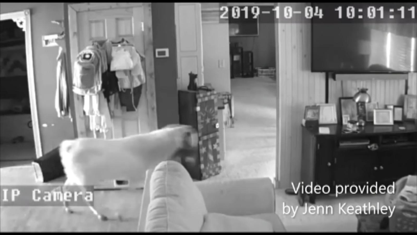 Teen finds goat intruder napping inside bathroom