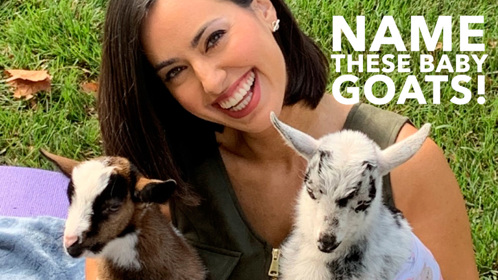 6ABC Shelter Me: NAME THESE BABY GOATS