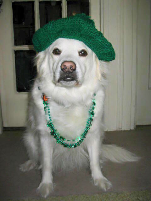 "<div class=""meta image-caption""><div class=""origin-logo origin-image none""><span>none</span></div><span class=""caption-text"">St Patrick's Day photos shared by Eyewitness News viewers!</span></div>"