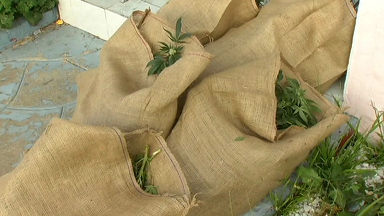 bags of pot plants