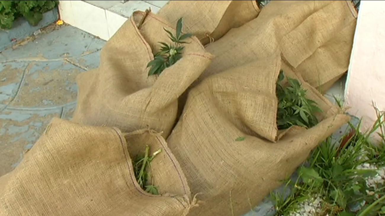 bags of pot plants
