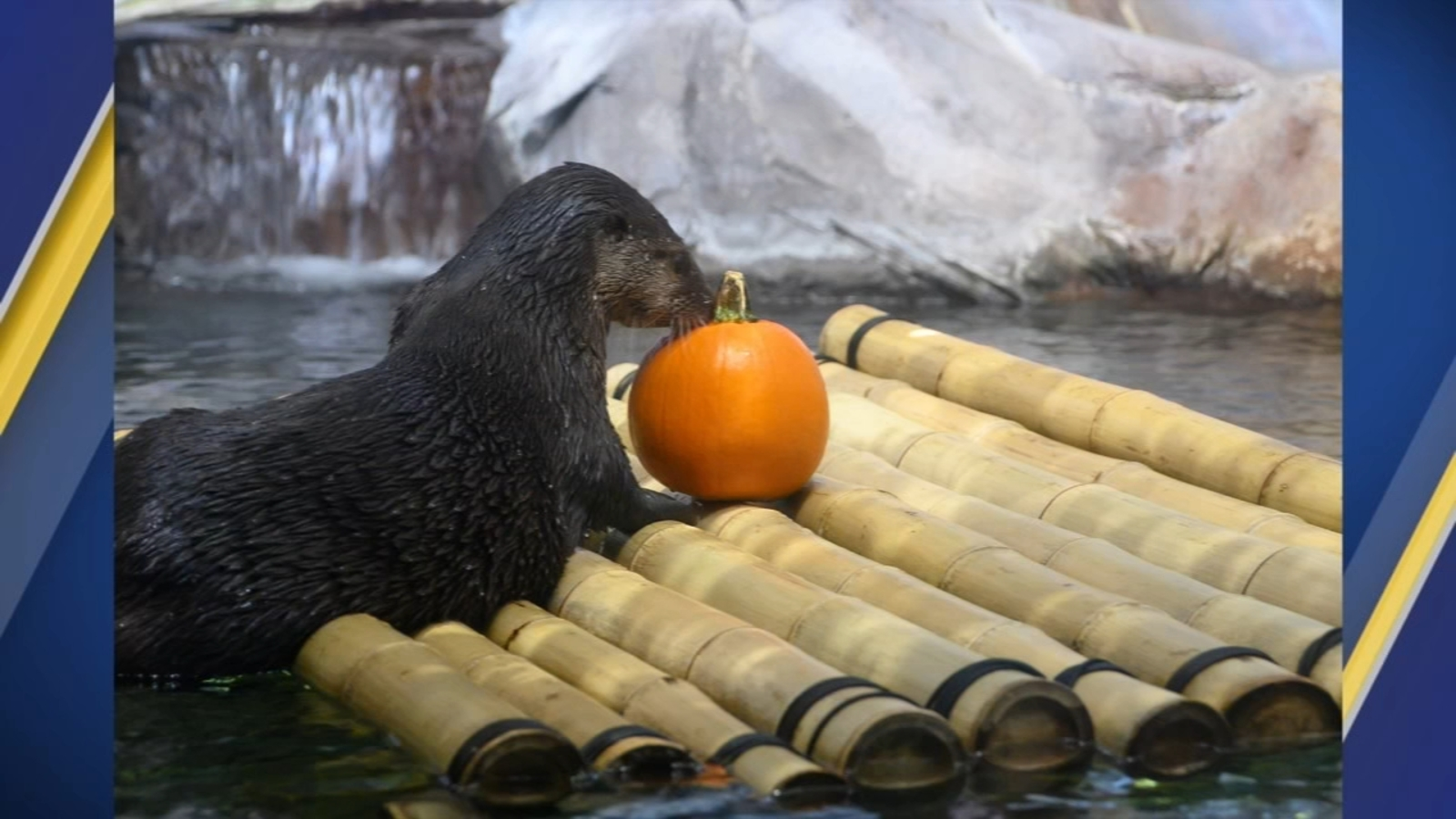 Halloween comes early at NC Aquarium in Pine Knoll Shores