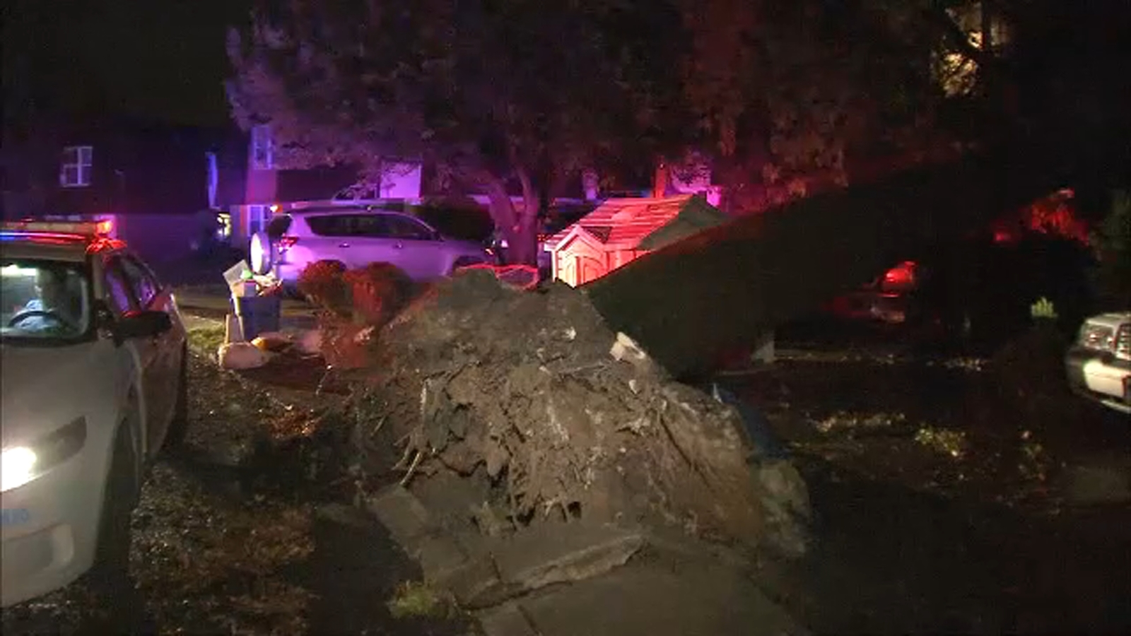 Quickly intensifying storm brings down large tree in Philadelphia