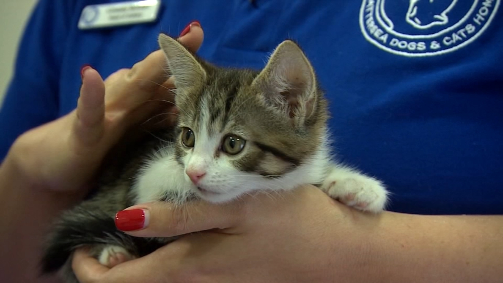 Get your cat vaccinated for rabies, say Fresno County health officials