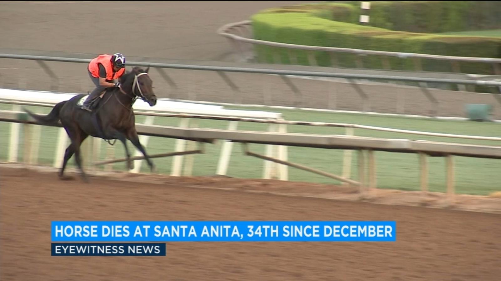 34th Horse Dies At Santa Anita Since December Abc7 Com