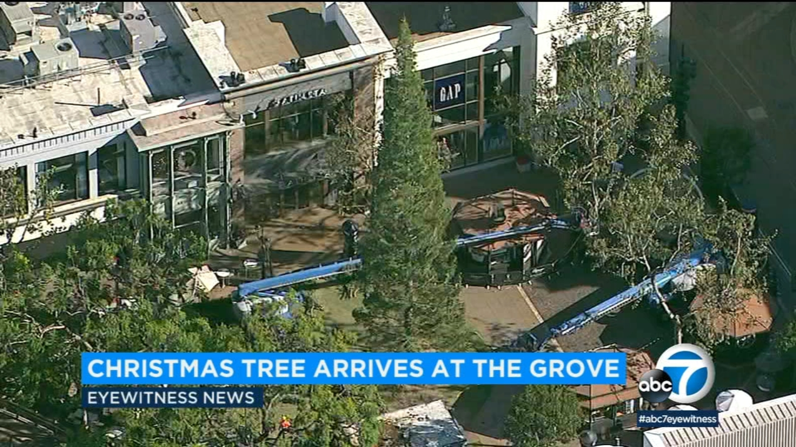 Christmas tree arrives at The Grove shopping center
