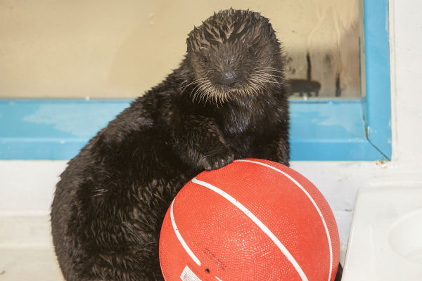 "<div class=""meta image-caption""><div class=""origin-logo origin-image none""><span>none</span></div><span class=""caption-text"">Luna thinks you ""otter"" complete your bracket before it's too late! (Shedd Aquarium)</span></div>"
