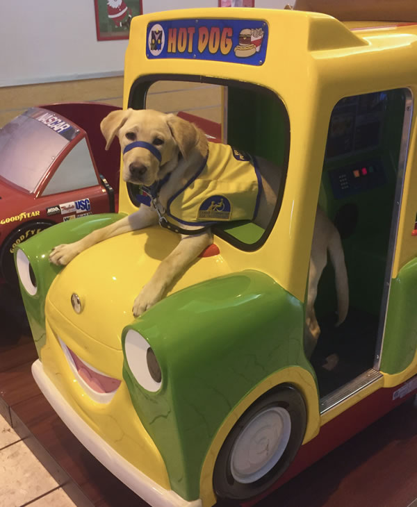 "<div class=""meta image-caption""><div class=""origin-logo origin-image kgo""><span>KGO</span></div><span class=""caption-text"">Canine Companions for Independence puppy Digby is at Stoneridge Mall. ABC7 News viewers are sending in photos of their dogs in honor of National Puppy Day on March 23, 2015. (Photo submitted by David/uReport)</span></div>"