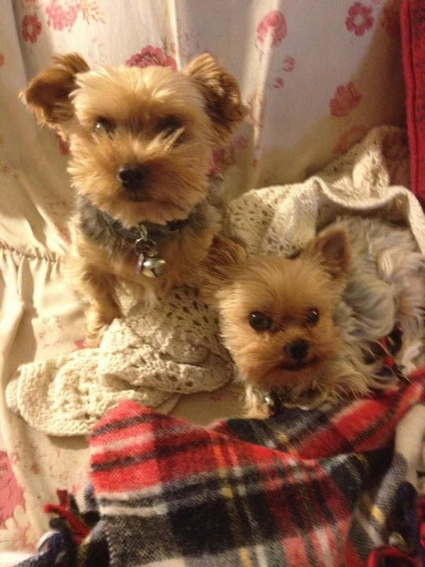 "<div class=""meta image-caption""><div class=""origin-logo origin-image kgo""><span>KGO</span></div><span class=""caption-text"">Good morning from Pica and Ebeneezer! ABC7 News viewers are sending in photos of their dogs in honor of National Puppy Day on March 23, 2015. (Photo submitted by Lulu/uReport)</span></div>"