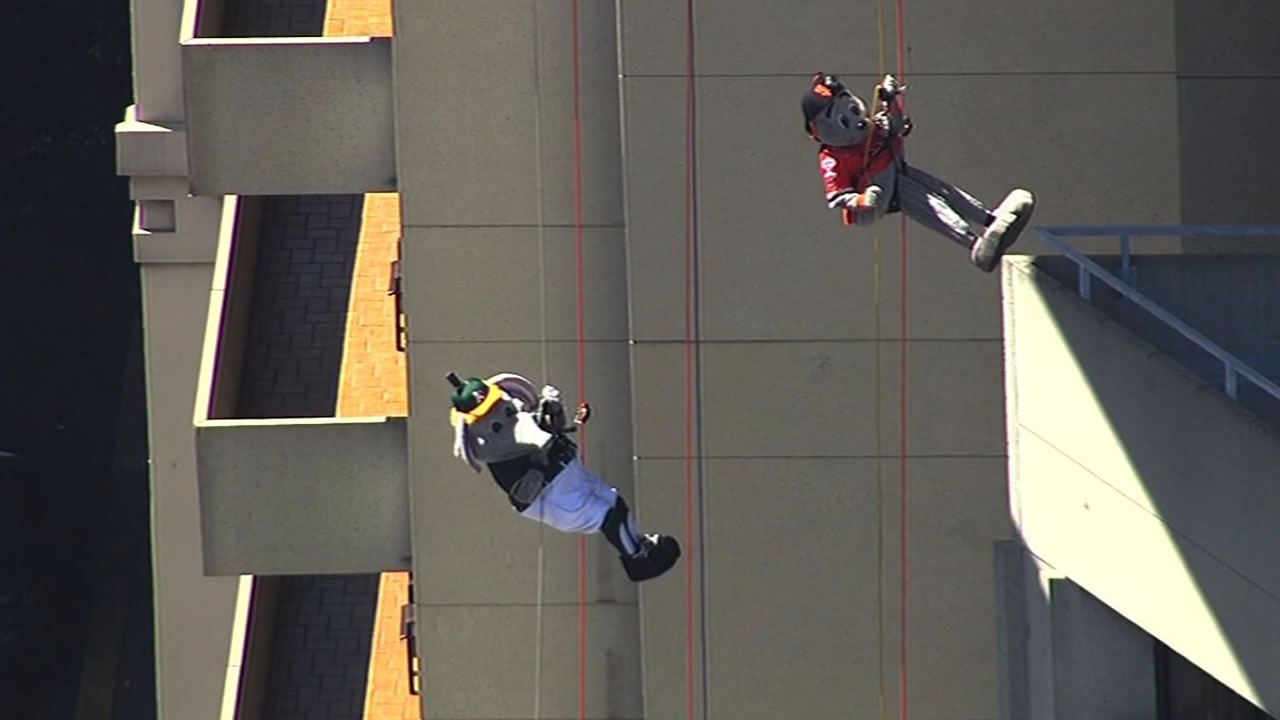 A's mascot Stomper and SF Giants mascot Lou Seal rappel down side of hotel
