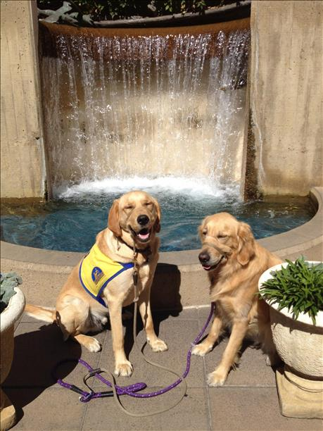 "<div class=""meta image-caption""><div class=""origin-logo origin-image kgo""><span>KGO</span></div><span class=""caption-text"">Canine companions pose for a photo at Stanford Shopping Center. ABC7 News viewers are sending in photos of their dogs in honor of National Puppy Day on March 23, 2015. (Photo submitted by JoAnn Golden/uReport)</span></div>"
