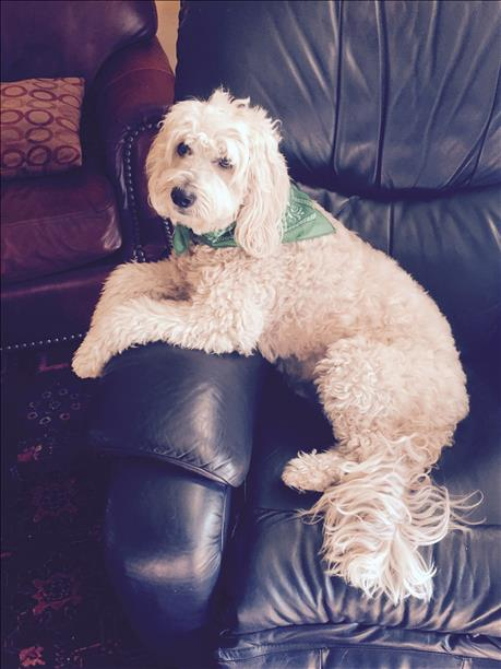 "<div class=""meta image-caption""><div class=""origin-logo origin-image kgo""><span>KGO</span></div><span class=""caption-text"">Hello, my name is Elvis. ABC7 News viewers are sending in photos of their dogs in honor of National Puppy Day on March 23, 2015. (Photo submitted by Roger Nelson/uReport)</span></div>"