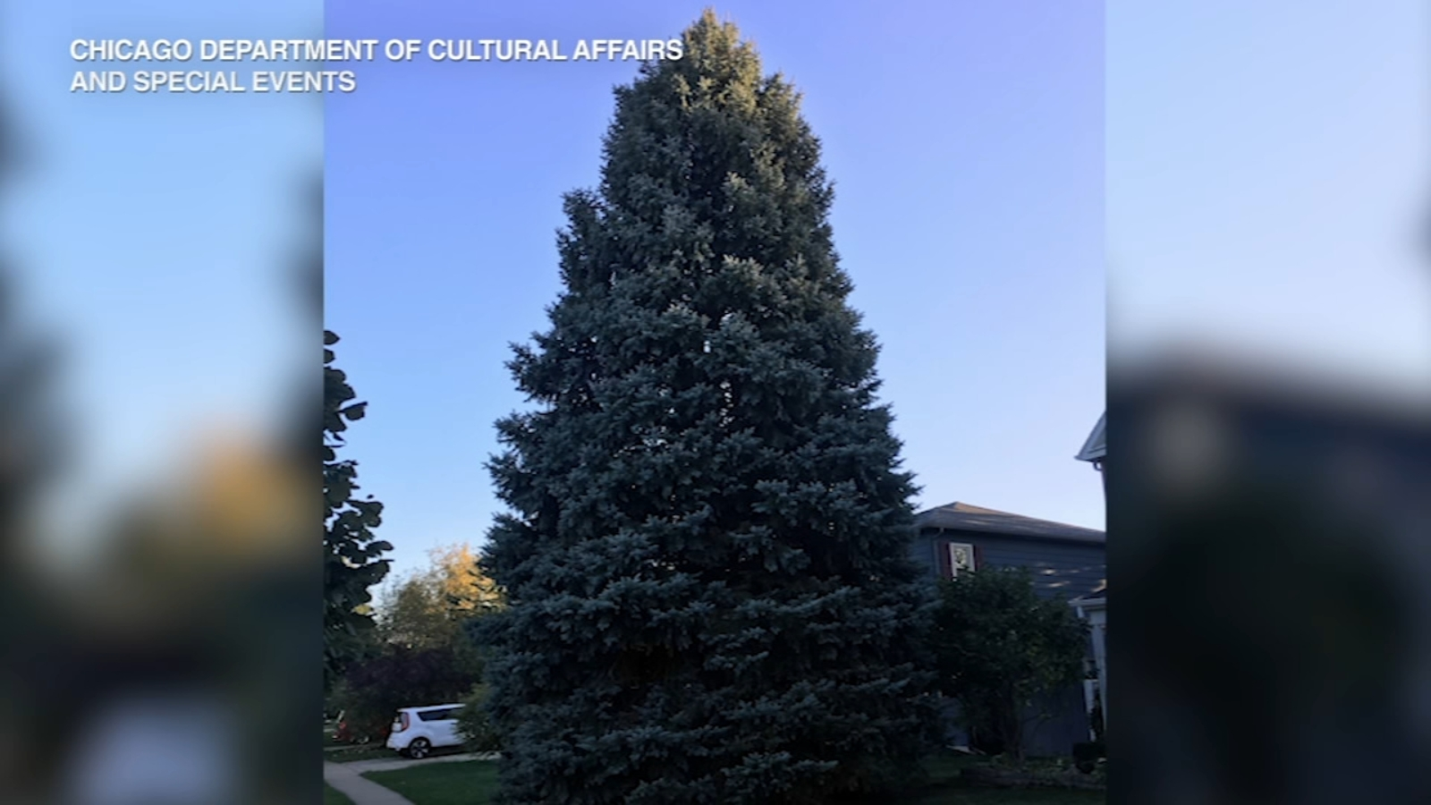 Chicago's 2019 Christmas tree comes from Elgin man's front ...