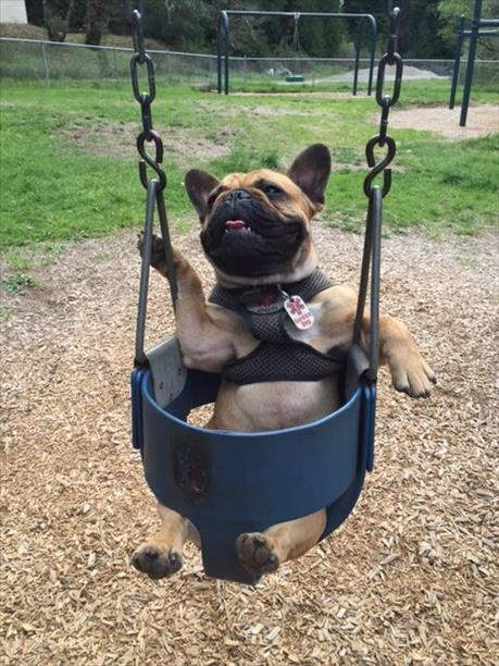"<div class=""meta image-caption""><div class=""origin-logo origin-image kgo""><span>KGO</span></div><span class=""caption-text"">DooDah loves to swing! ABC7 News viewers are sending in photos of their dogs in honor of National Puppy Day on March 23, 2015. (Photo submitted by Mikela Cameron/uReport)</span></div>"
