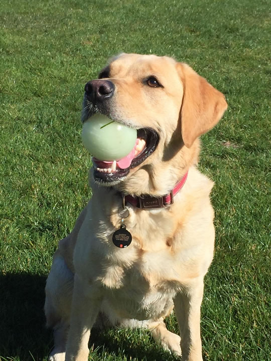 "<div class=""meta image-caption""><div class=""origin-logo origin-image kgo""><span>KGO</span></div><span class=""caption-text"">Meet Maddie! ABC7 News viewers are sending in photos of their dogs in honor of National Puppy Day on March 23, 2015. (Photo submitted by Zach/uReport)</span></div>"