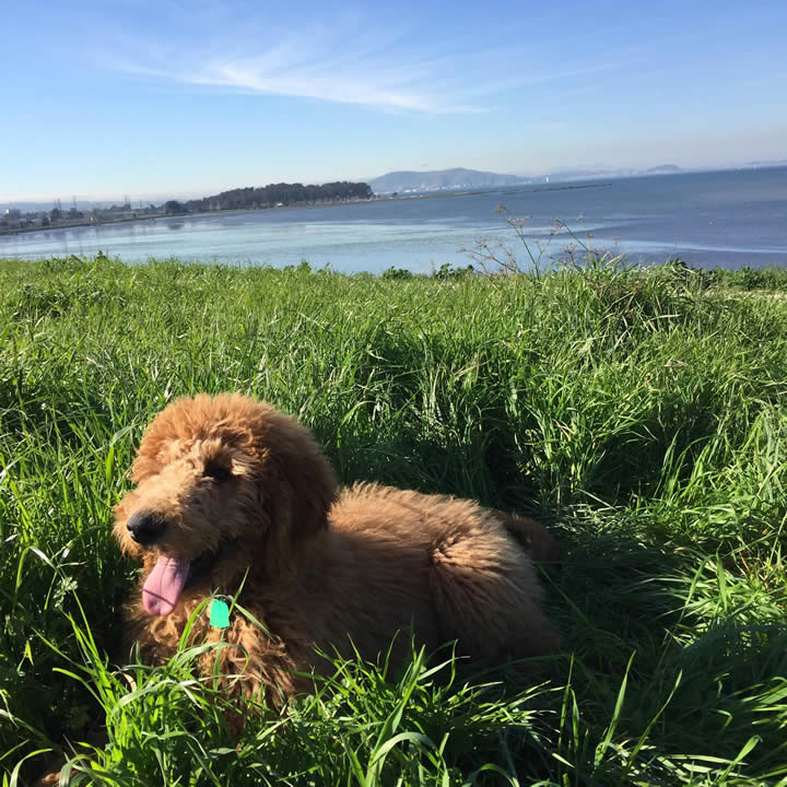 "<div class=""meta image-caption""><div class=""origin-logo origin-image kgo""><span>KGO</span></div><span class=""caption-text"">Meet 6-month-old Rupert! ABC7 News viewers are sending in photos of their dogs in honor of National Puppy Day on March 23, 2015. (Photo submitted by Christine/uReport)</span></div>"