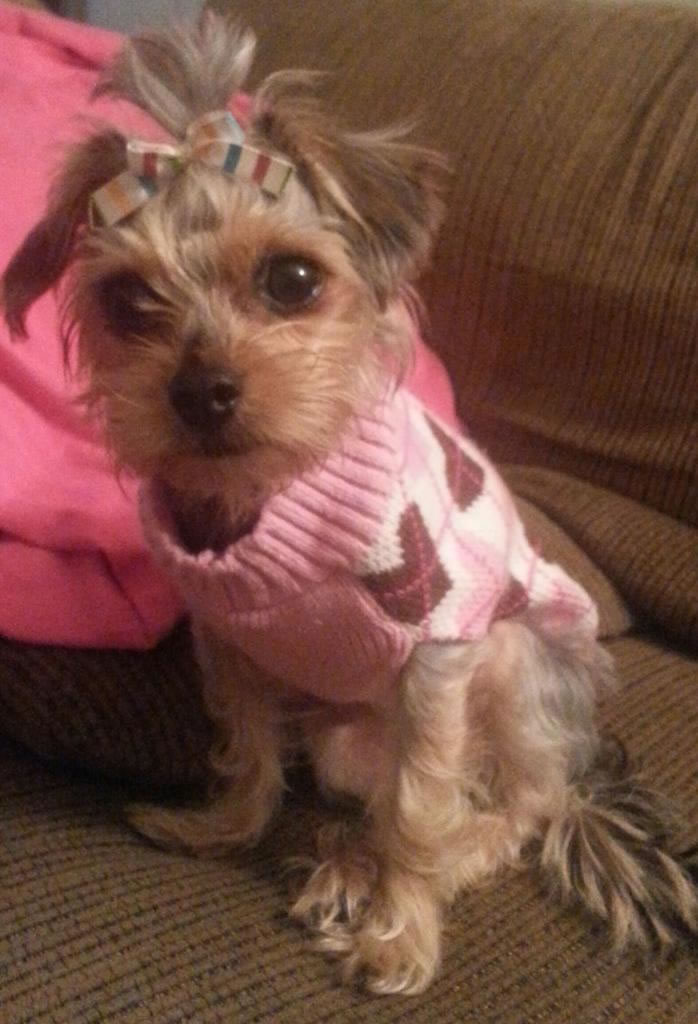 "<div class=""meta image-caption""><div class=""origin-logo origin-image kgo""><span>KGO</span></div><span class=""caption-text"">Zoe wears pink in honor of her now cancer free mom! ABC7 News viewers and staff are sending in photos of their dogs in honor of National Puppy Day on March 23, 2015. (Photo submitted by Sandra/Twitter)</span></div>"