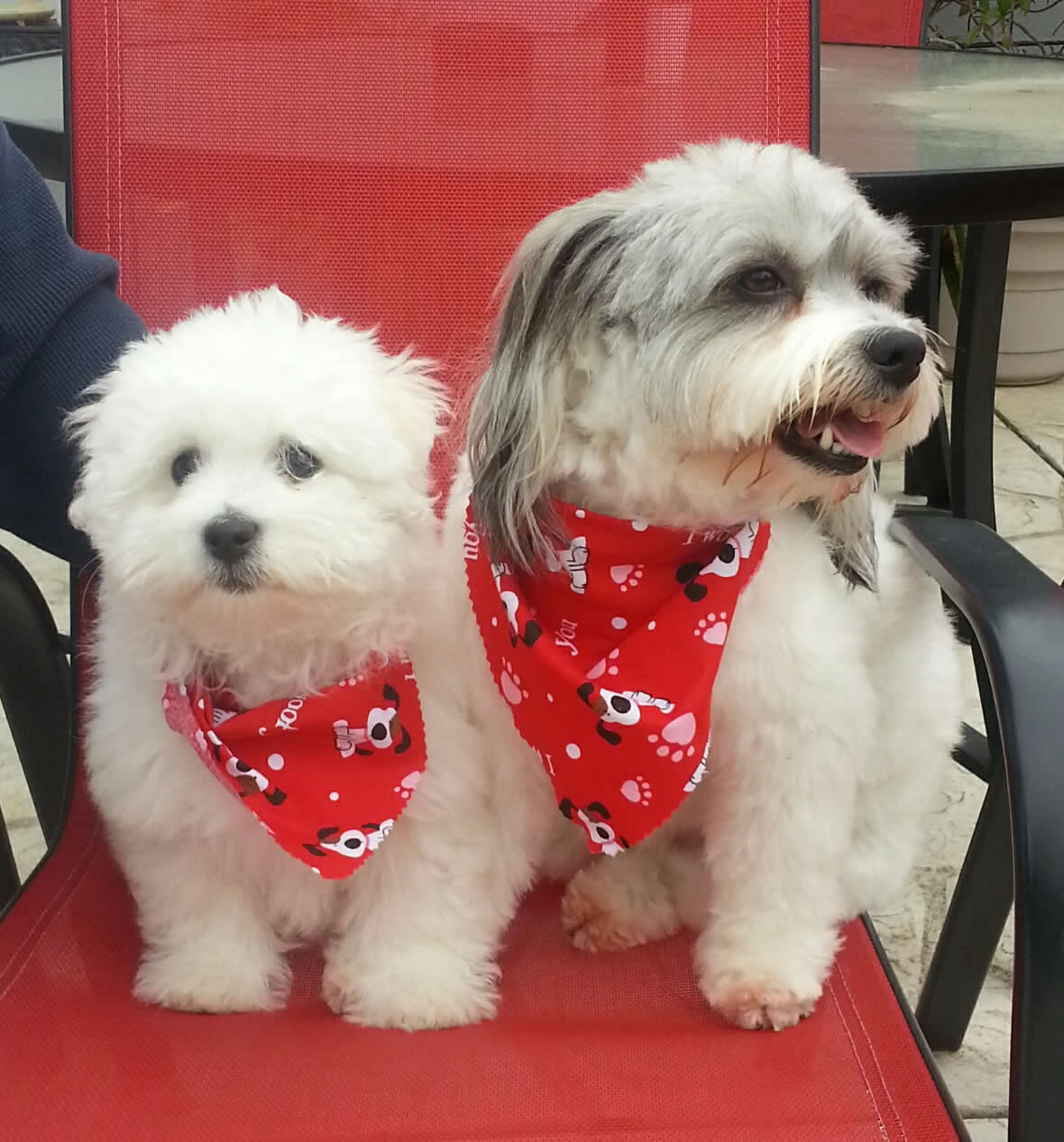 "<div class=""meta image-caption""><div class=""origin-logo origin-image none""><span>none</span></div><span class=""caption-text"">Meet sisters Cami & Harper!  ABC7 News viewers and staff are sending in photos of their dogs in honor of National Puppy day on March 23, 2015. (Photo submitted by snoozie6969/KGO-TV uReport)</span></div>"